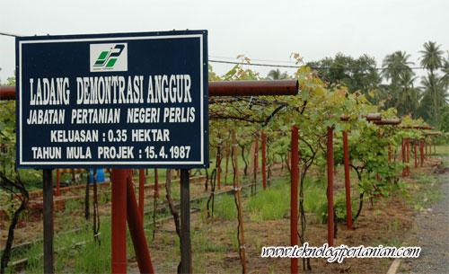 Ladang Anggur Terawal di Malaysia